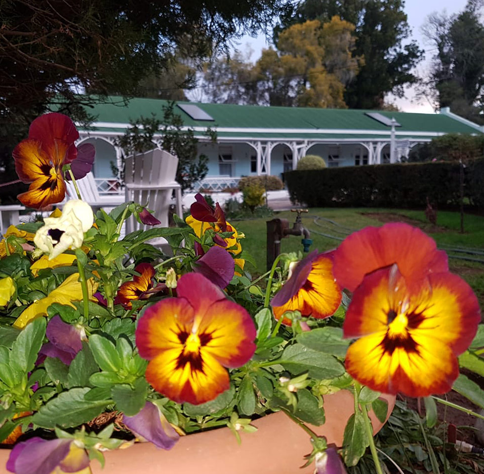 Adley House Flowers in Garden - Oudtshoorn Bed and Breakfast