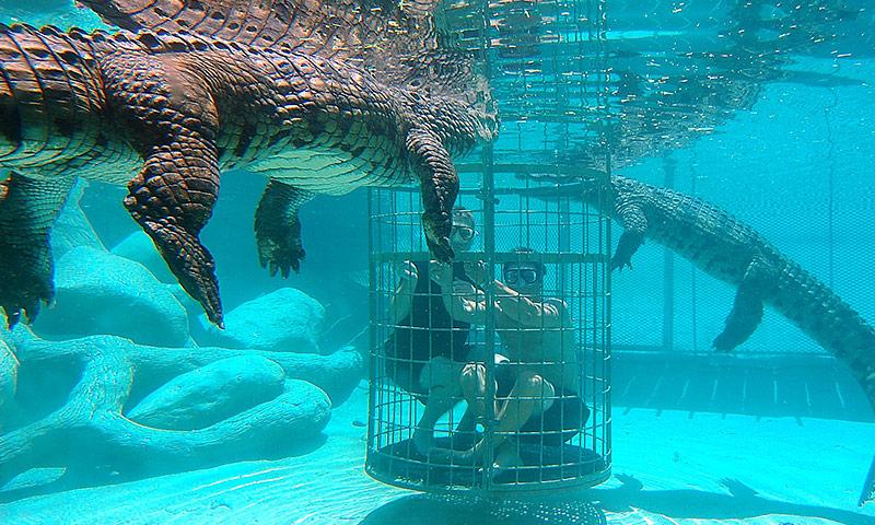 Crocodile Cage Diving at Cango Wildlife Ranch